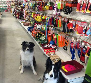 magasin chien