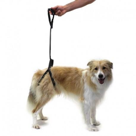 pour chien
