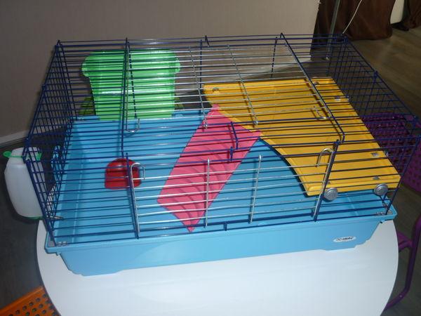 cage cochon d inde occasion