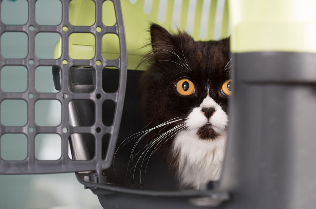 chat peureux