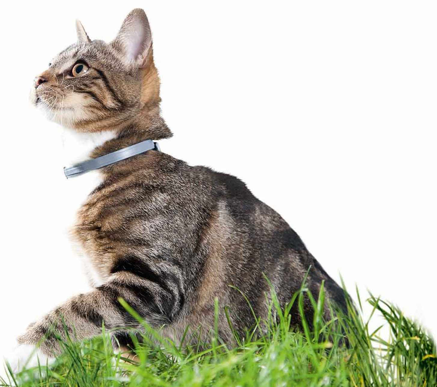 collier anti puce chat efficace