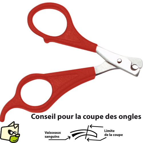 coupe ongle chat
