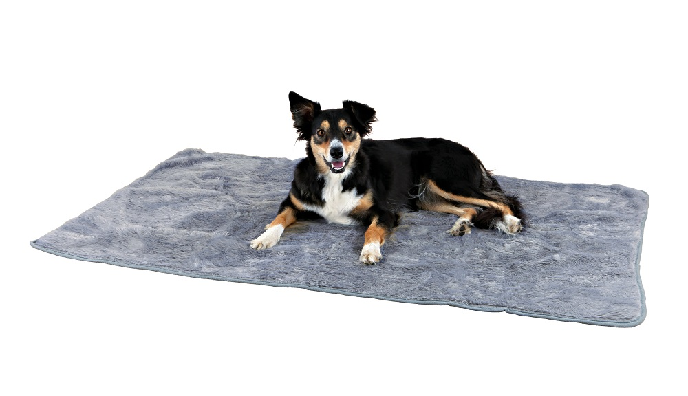 couverture pour chien