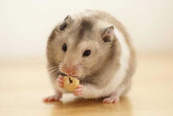 site pour hamster