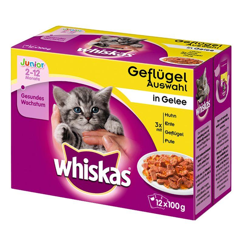 whiskas chaton